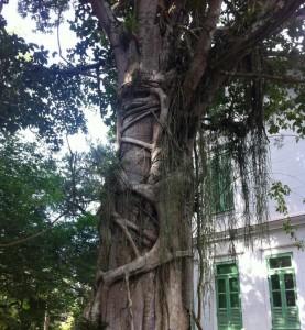 A nova versão do software deve ser igual a uma árvore estranguladora.